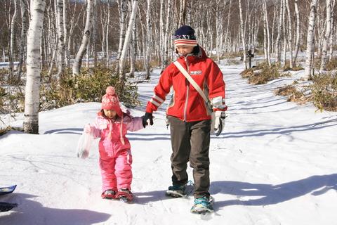 雪の白樺の林をお散歩