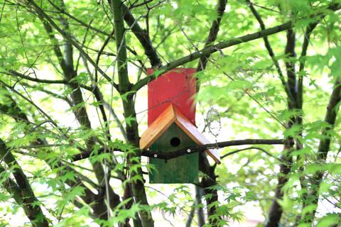 新緑のモミジと巣箱