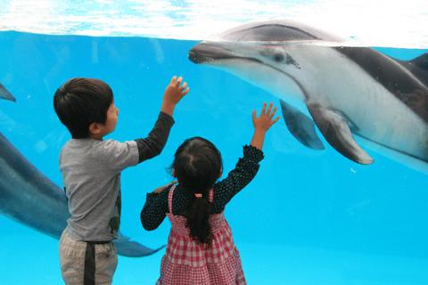 イルカと二人