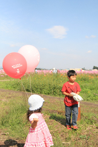 風船とコスモス畑
