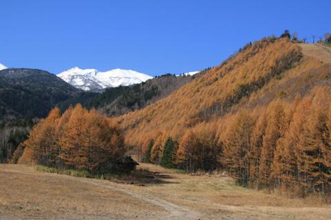 黄葉のカラマツと乗鞍岳