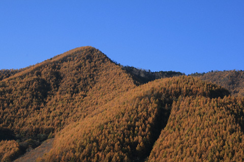 カラマツの山