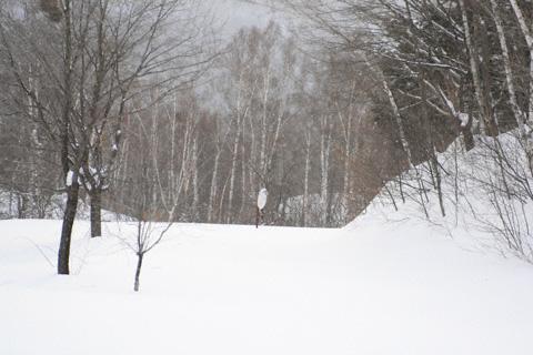 雪とカーブミラー