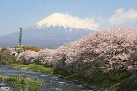 龍巌淵の桜