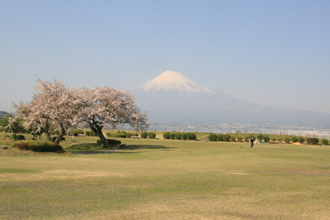 原っぱと富士山