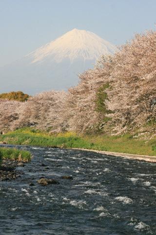 桜と川と富士山