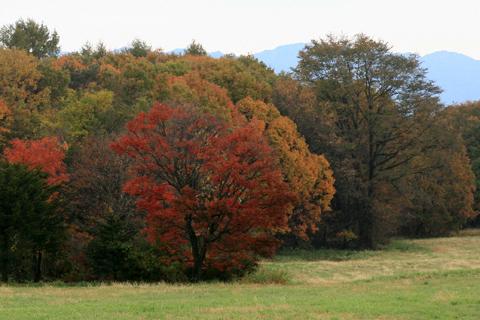 牧場の紅葉