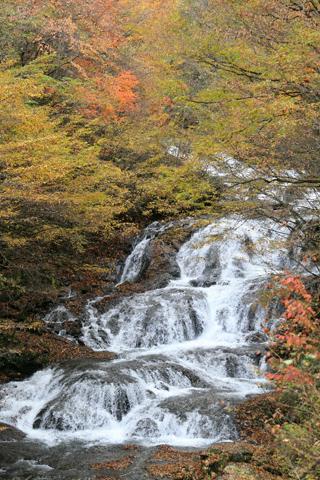 紅葉の魚止めの滝