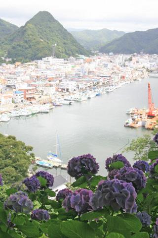 下田港とあじさい