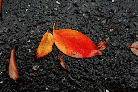 道路に落ちた紅葉