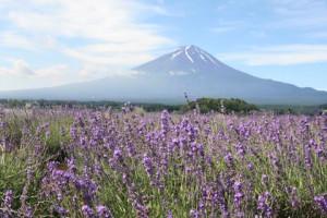 富士山とラベンダー