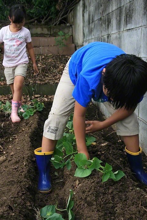 苗を植える恒太